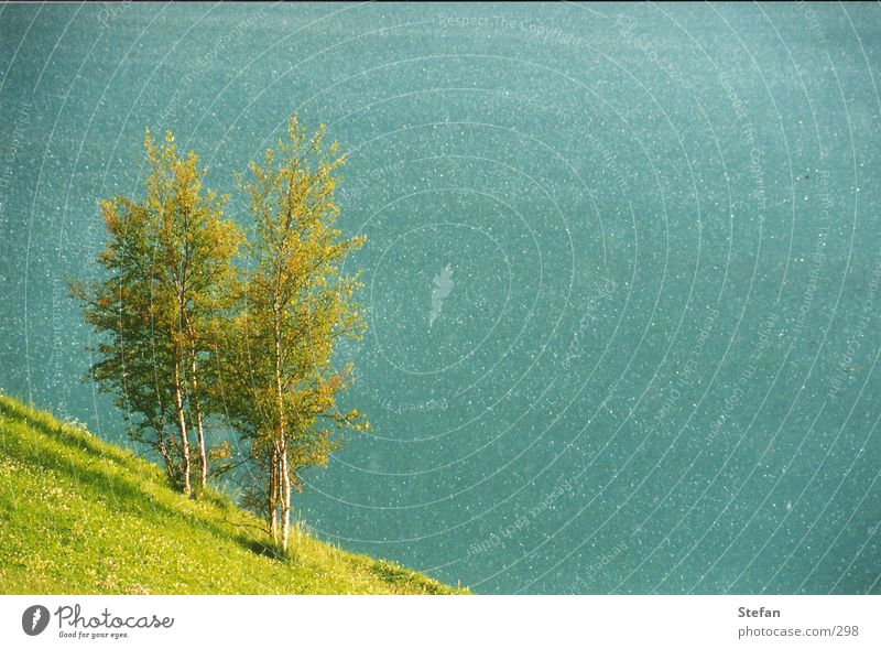 Water Sky Tree Green Lake Waves Wind Alps Turquoise Italy Reservoir South Tyrol