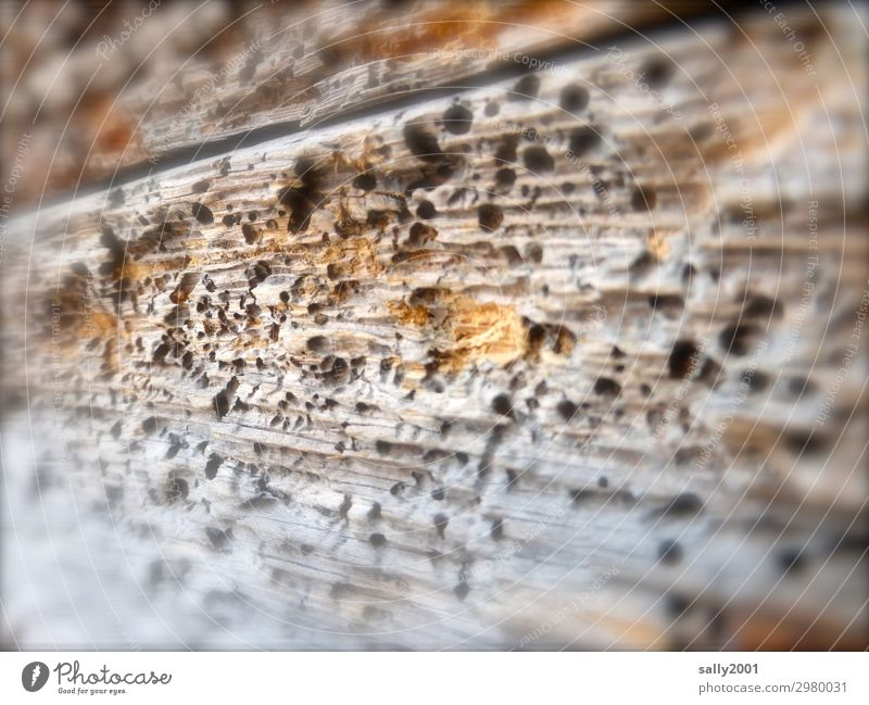 There's the worm in there... woodworm Old To feed Broken Senior citizen Fiasco Nature Decline Transience Wood Wooden wall Hollow Worm Pests Perforated Weathered