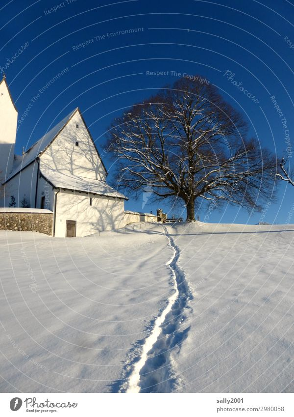 White Tree Relaxation Loneliness Calm Winter Mountain Religion and faith Cold Lanes & trails Snow Contentment Fresh Church Esthetic Beautiful weather