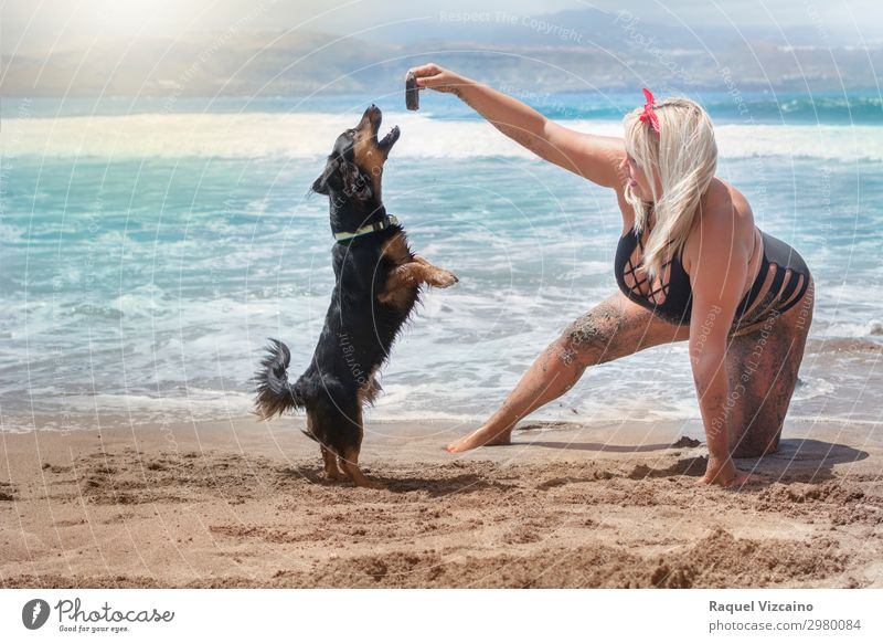 woman playing with dog on the beach Woman Human being Vacation & Travel Dog Youth (Young adults) Summer Blue Water Ocean Animal Joy Beach 18 - 30 years