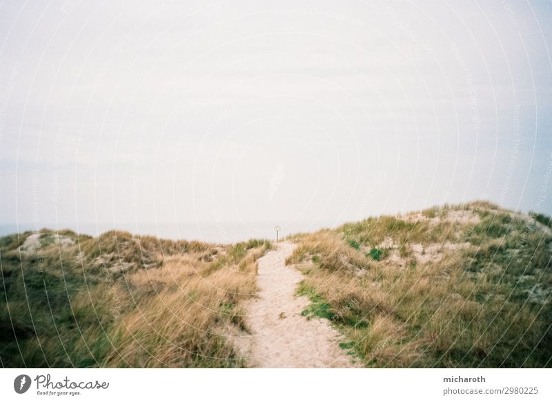 Way to the beach Trip Summer vacation Environment Nature Plant Sand Sky Climate Beautiful weather Bushes Foliage plant Beach North Sea Ocean Island Langeoog