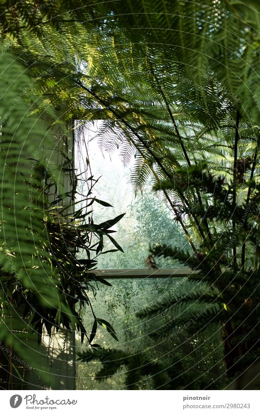 Nature Summer Plant Green Leaf Natural Growth Glass Exotic Virgin forest Window pane Botany Juicy Tropical Fern Leaf green