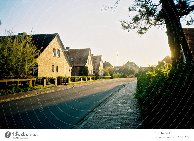 sunlit road Healthy Contentment Relaxation Vacation & Travel Summer vacation Environment Nature Cloudless sky Beautiful weather Plant Grass Bushes North Sea