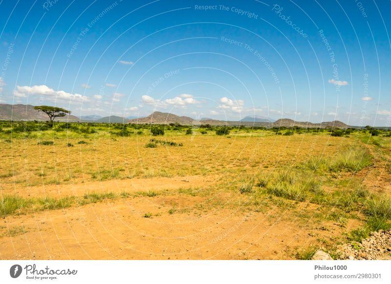 View of the trails and savannah Playing Vacation & Travel Safari Summer Environment Nature Landscape Sky Tree Grass Park Blue Green Africa Kenya Samburu african