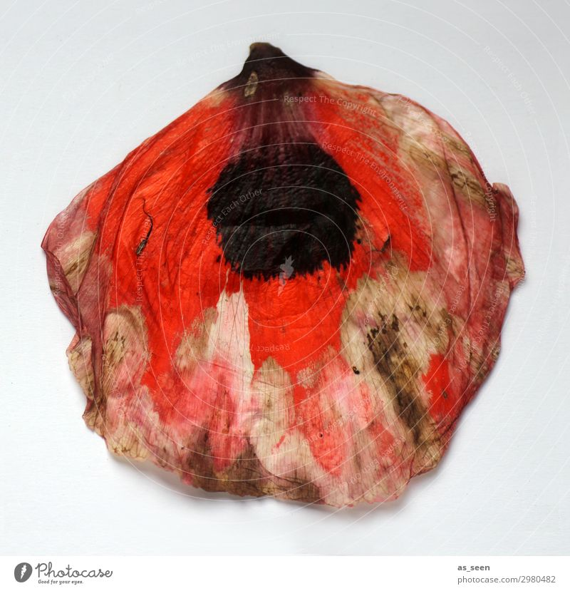 flower dress Art Painting and drawing (object) Nature Summer Autumn Blossom Poppy Poppy blossom Poppy leaf Fashion Illuminate Lie Faded To dry up Esthetic