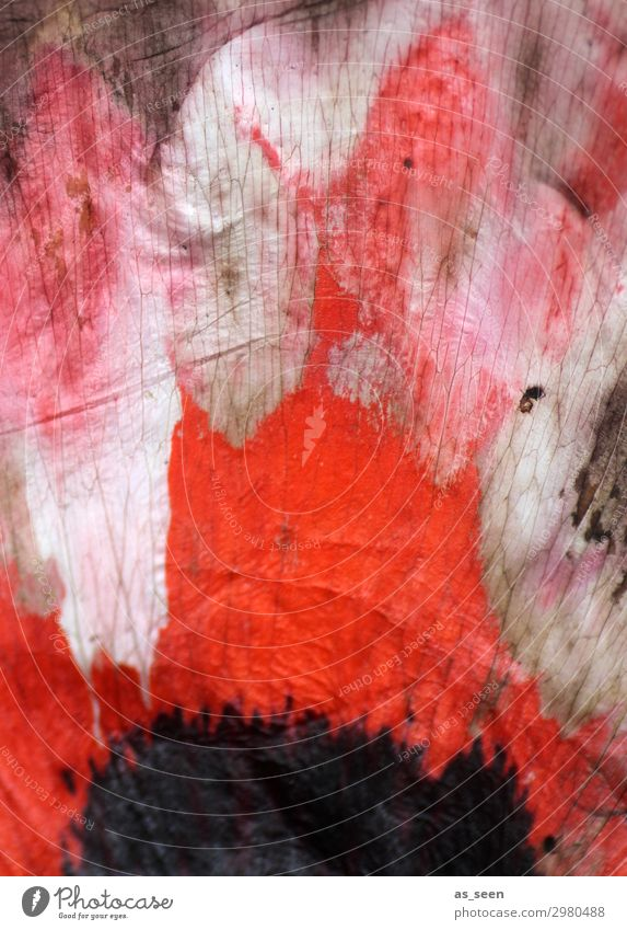 poppy seed painting Harmonious Art Nature Flower Blossom Blossom leave Poppy blossom Poppy leaf Blossoming Illuminate Faded Esthetic Authentic Wild Pink Red