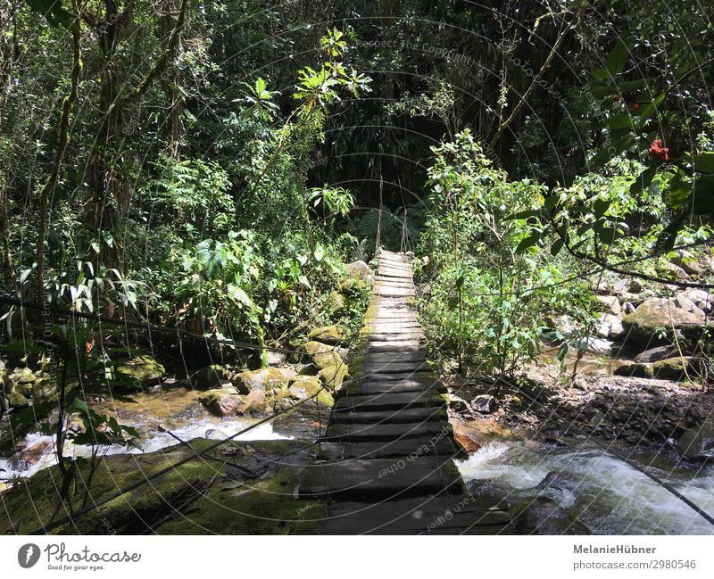 Suspension bridge in the mountains of Colombia's coffee zone Environment Nature Water Discover Going Hiking Coffee Bridge Forest Virgin forest Wooden bridge