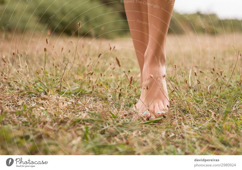 Young female legs walking on the grass Beautiful Relaxation Leisure and hobbies Vacation & Travel Summer Garden Woman Adults Feet Environment Nature Plant Grass