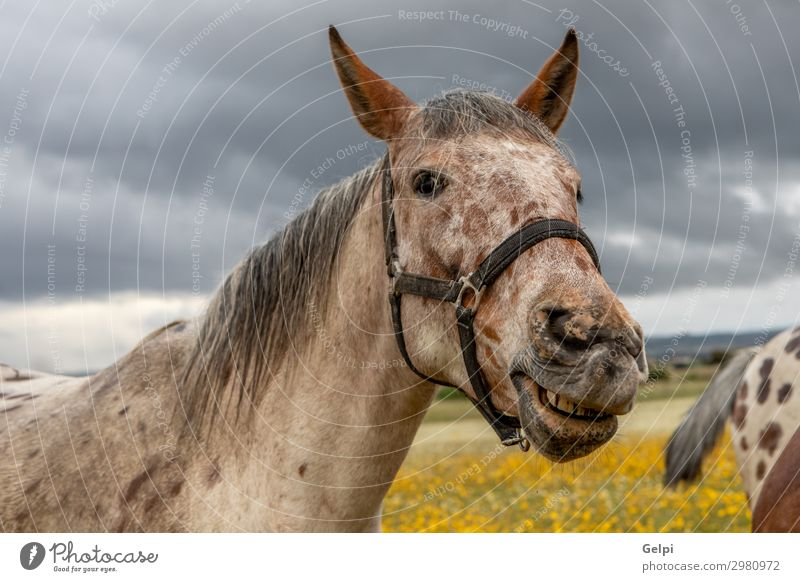 Close up portrait of a free horse Beautiful Face Vacation & Travel Freedom Landscape Animal Sky Clouds Grass Blossom Park Meadow Horse Herd Wild Brown Yellow
