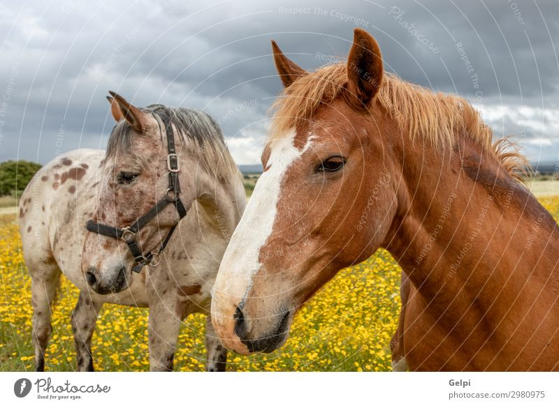 Couple of horses in a sunny day Beautiful Freedom Summer Partner Landscape Animal Sky Clouds Storm Tree Grass Park Meadow Horse Herd Love Thin Wild Brown Green
