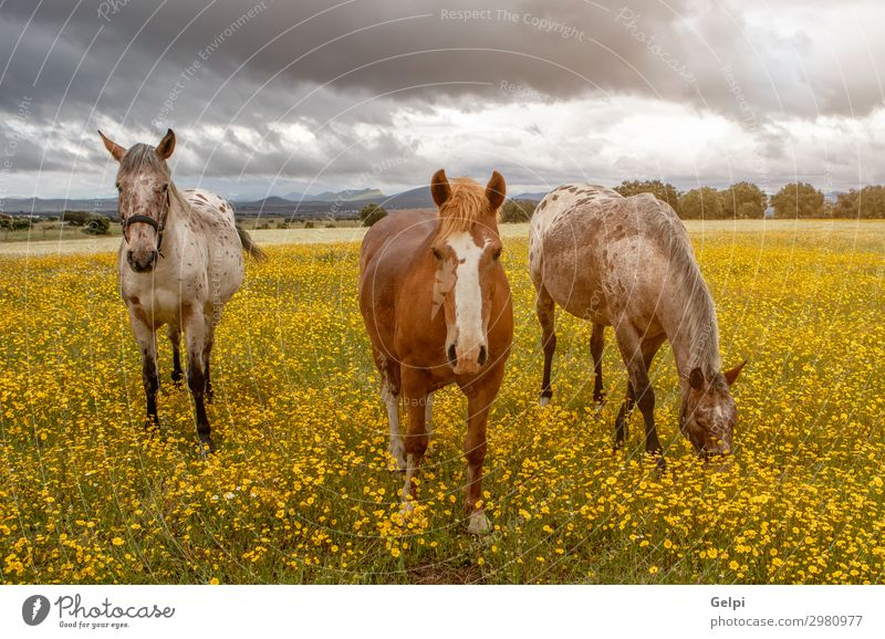 Three horses in a sunny day Beautiful Freedom Summer Couple Partner Landscape Animal Sky Clouds Storm Grass Park Meadow Horse Herd Love Thin Wild Brown Green