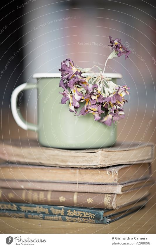 time Cup Mug Flower Old Book Dried flower Stack Antique Second-hand bookshop Pallid Thin Subdued colour Interior shot Neutral Background Shallow depth of field