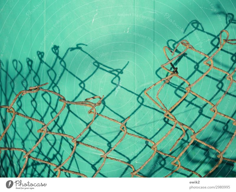 wired Wire netting fence Metal Plastic Old Firm Brown Green Complex Decline Rust Damage Keg Colour photo Exterior shot Close-up Detail Pattern