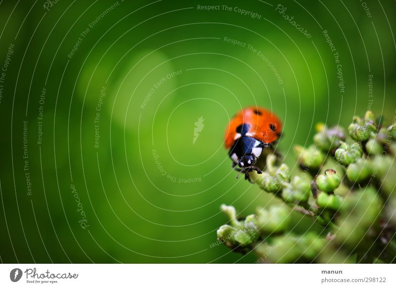 Nature Green Plant Animal Emotions Happy Religion and faith Natural Wild animal Bushes Sign Belief Beetle Optimism Ladybird Wild plant