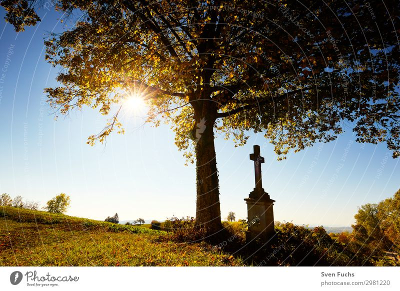 Cross under a tree with autumn leaves in back light Summer Sun Nature Landscape Horizon Spring Autumn Tree Grass Leaf Meadow Field Blue Yellow Green Red Hope
