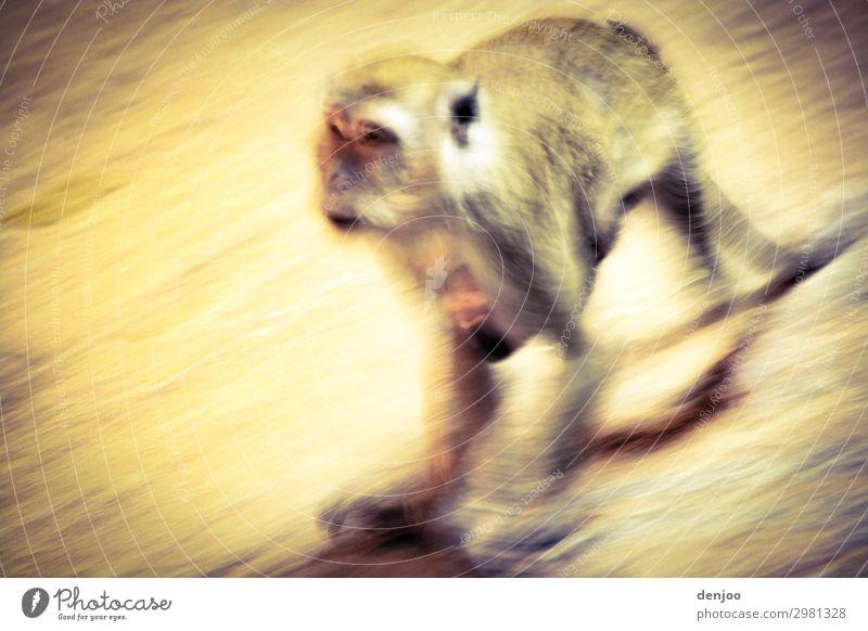 monkey Walking Exotic Asia travel Malaya Batu Caves Exterior shot Motion blur