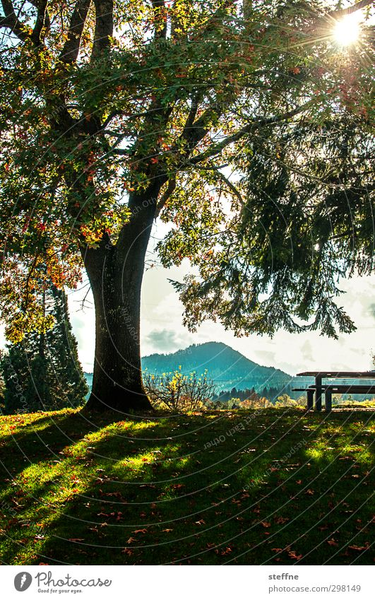 Park bench with a view Sun Sunlight Autumn Beautiful weather Tree Relaxation Break Calm Colour photo Exterior shot