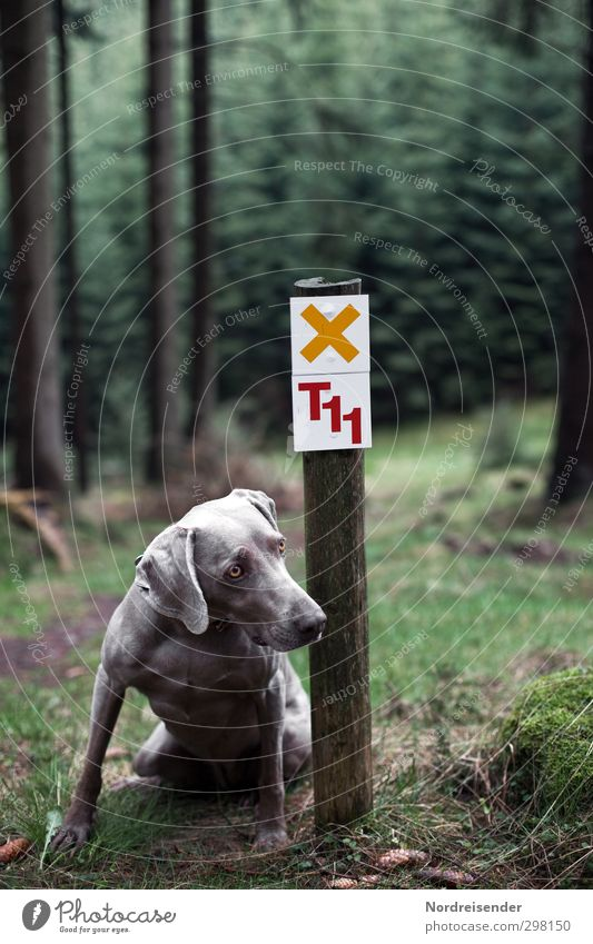 Dog Nature Joy Landscape Animal Forest Lanes & trails Leisure and hobbies Sit Elegant Signs and labeling Hiking Characters Trip Signage Observe