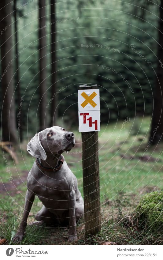 Please. Leisure and hobbies Trip Hiking Nature Landscape Forest Lanes & trails Animal Pet Dog 1 Sign Characters Digits and numbers Signs and labeling Signage