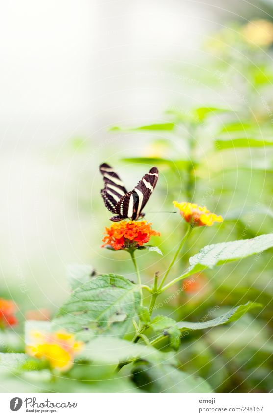 Nature Green Plant Flower Animal Environment Spring Bright Natural Orange Wild animal Bushes Butterfly Exotic