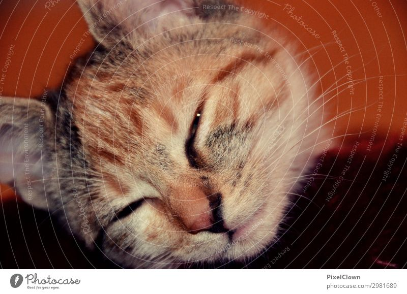 Dreaming cat Joy Animal Pet Cat 1 Sleep Cute Brown Emotions Moody Calm Colour photo Close-up Detail Squint