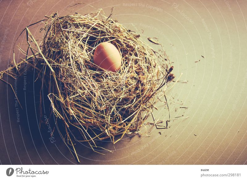 Natural Brown Food Wait Fresh Easter Dry Organic produce Egg Country life Straw Vegetarian diet Nest Hay Oval Hen's egg