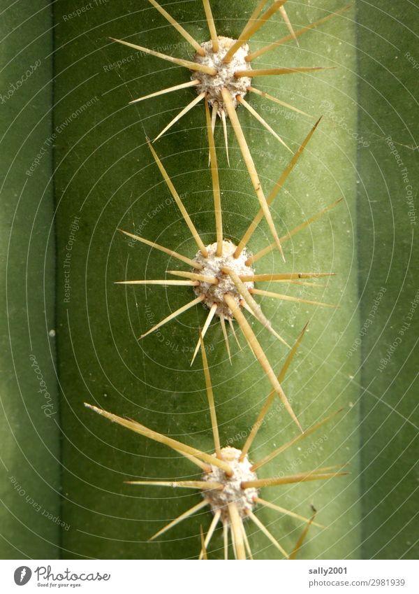 Plant Green Dangerous Point Threat Rebellious Cactus Pierce