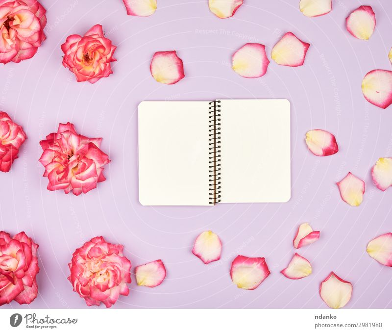 open notebook with white blank pages Plant Red Flower Love Blossom Feasts & Celebrations Business Pink Above Design Decoration Open Birthday Book Romance Paper