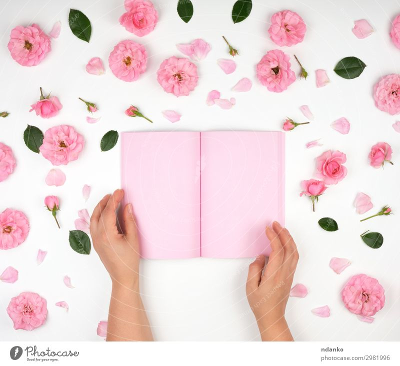 two female hands holding open notepad Woman Human being White Hand Flower Adults Feasts & Celebrations Business School Pink Office Open Birthday Arm Study Book