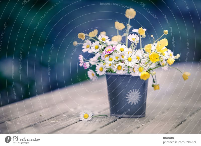 a piece of meadow Decoration Mother's Day Nature Spring Flower Blossom Wild plant Daisy Crowfoot Spring flower Meadow flower Bouquet Vase Spring fever Picked