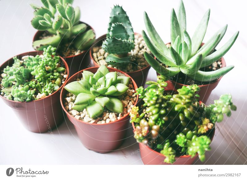 Six green exotic and rare succulent plants Nature Plant Green Flower Leaf Healthy Fresh Simple Exotic Pot plant Succulent plants Aloe Sedum