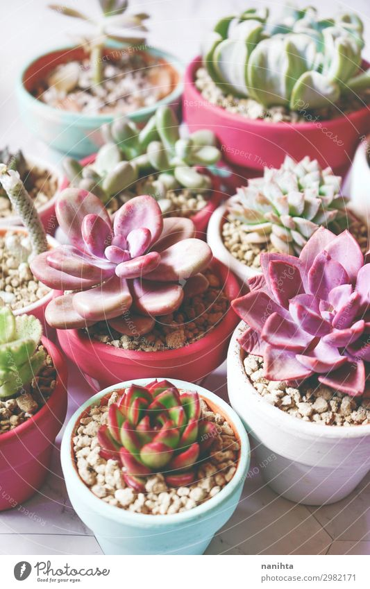 Beautiful mix of colorful succulent plants Nature Plant Flower Leaf Healthy Garden Exceptional Flat (apartment) Decoration Fresh Growth Authentic Many Exotic