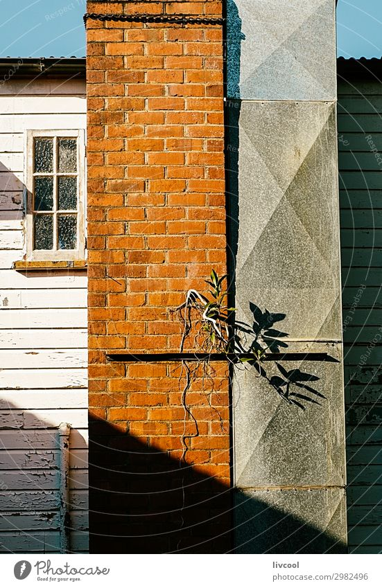 facade with shadow , yungaburra Old Plant Blue Town White Flower House (Residential Structure) Window Street Architecture Lifestyle Wall (building) Building