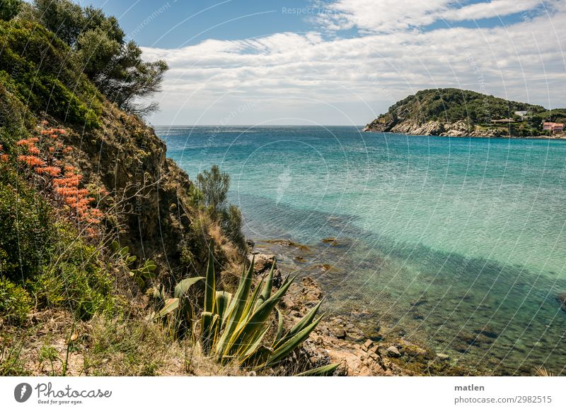 Costa Brava Nature Landscape Plant Air Water Sky Clouds Horizon Spring Beautiful weather Flower Grass Bushes Cactus Leaf Rock Mountain Coast Ocean Exotic Kitsch