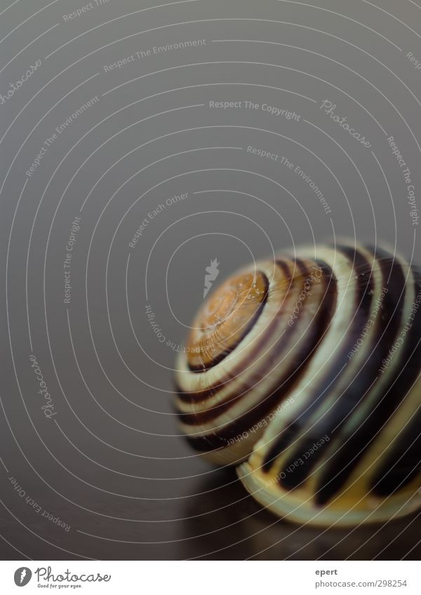 At home Animal Snail 1 Wait Living or residing Esthetic Round Protection Patient Calm Hide Colour photo Close-up Deserted Copy Space top Neutral Background