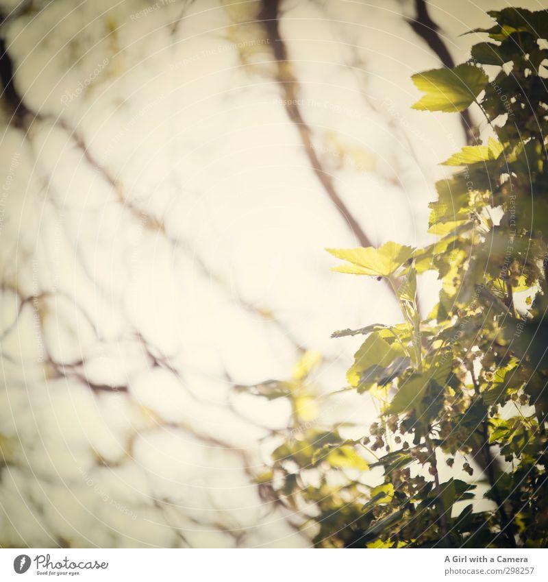 Nature Green Plant Tree Leaf Environment Spring Illuminate Fresh