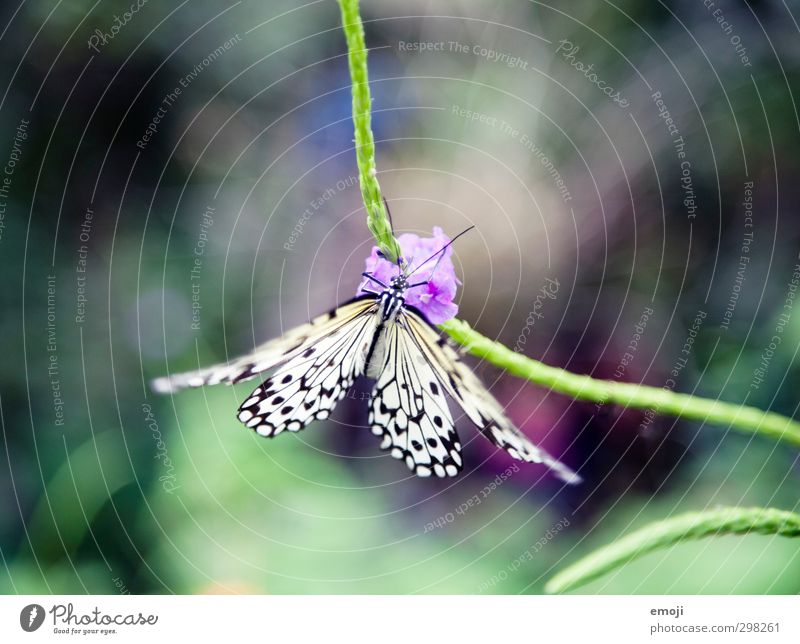 (to) flutter Environment Nature Plant Animal Spring Flower Wild animal Butterfly 1 Exotic Natural Beautiful Green Multicoloured Colour photo Exterior shot