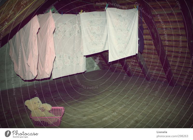 forgotten Attic Teddy bear Old Dark Creepy Pink Moody Bravery Secrecy Calm Authentic Hope Belief Dream Grief Longing Homesickness Loneliness Forget Colour photo