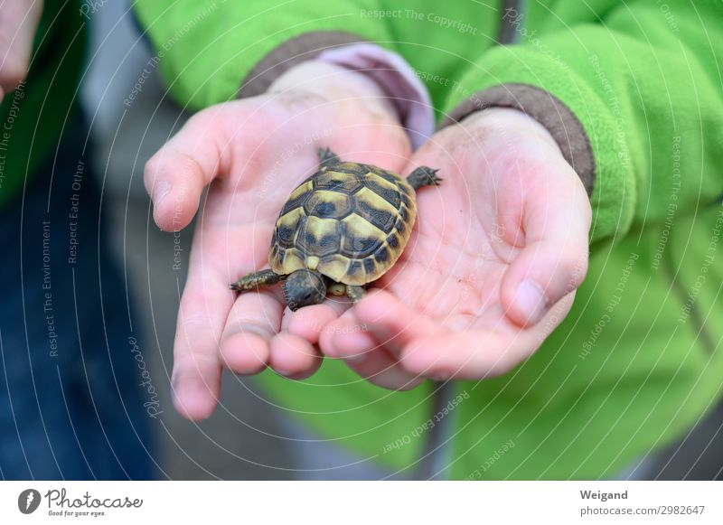 turtle Parenting Kindergarten Child Hand 3 - 8 years Infancy Animal Pet 1 Touch Painting (action, work) Exotic Attachment Turtle Colour photo Copy Space bottom