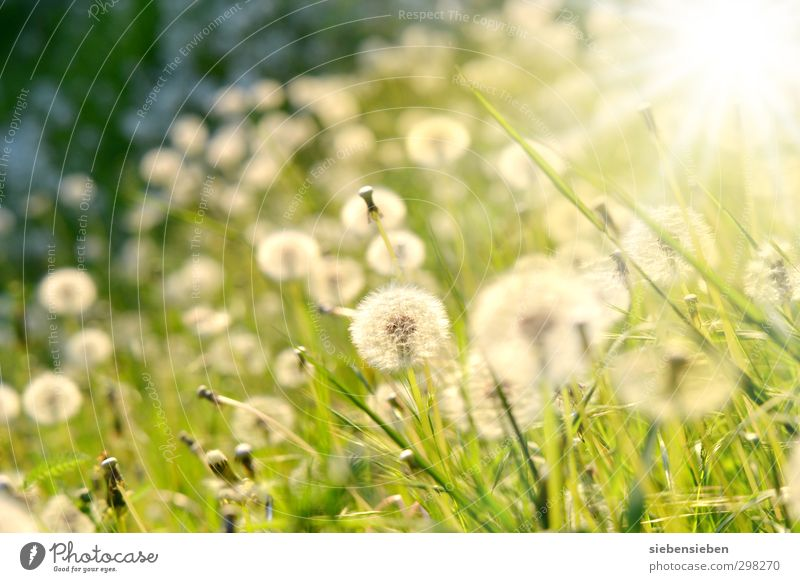 Nature Green Beautiful Summer Plant Sun Flower Meadow Emotions Grass Happy Blossom Bright Moody Beautiful weather Happiness