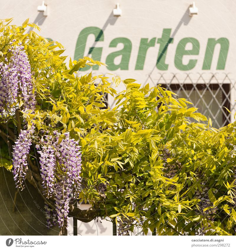 garden Environment Spring Beautiful weather Plant Wild plant Garden Wall (barrier) Wall (building) Window Characters Fragrance Friendliness Fresh Funny Positive