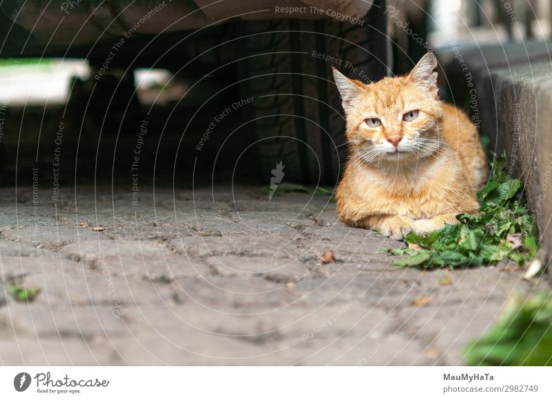 cat portrait in the street Cat Nature Summer Colour Beautiful Green White House (Residential Structure) Animal Loneliness Face Street Yellow Gray Bright Sit