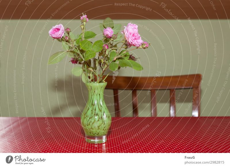 Bouquet of roses on the kitchen table Damask Rose old rose Vase with flowers bleed buds Pink Decoration Table tablecloth white dots Red Backrest spring