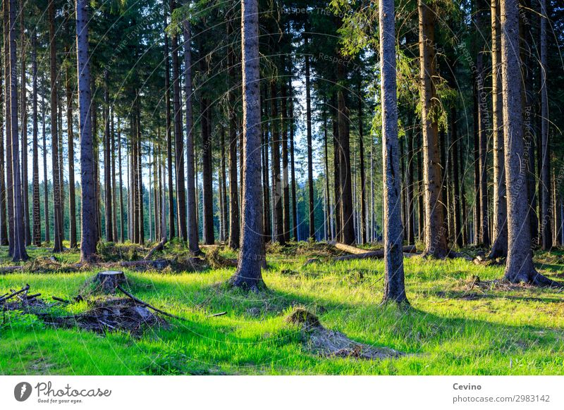 forest Nature Landscape Earth Beautiful weather Forest Hiking Meadow Tree trees Sun To go for a walk Woodground Clearing Forest walk Root Air green meadow Green