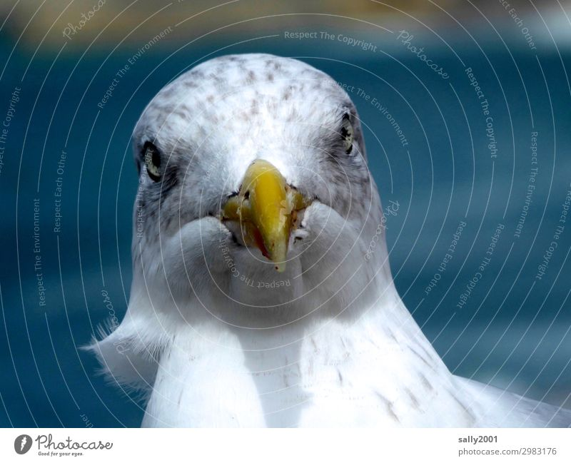 monthly Animal Bird Beak Seagull Gull birds 1 Looking Brash Curiosity Rebellious Point Aggression Wind Colour photo Exterior shot Day Deep depth of field