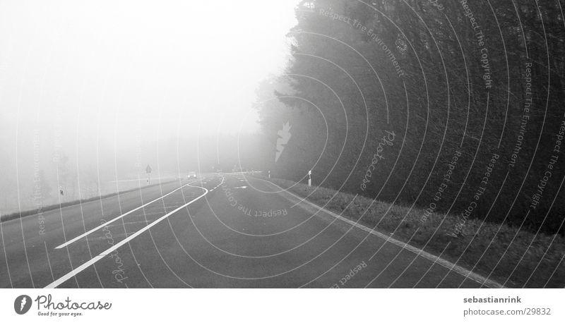 free ride Fog Black White Forest Traffic lane Driving Transport Street Line Lanes & trails