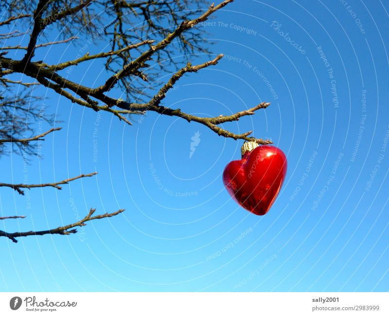 valuable declaration of love... Cloudless sky Winter Tree Heart Exceptional Sympathy Love Infatuation Romance Glitter Ball Red Hang Hang up Branch