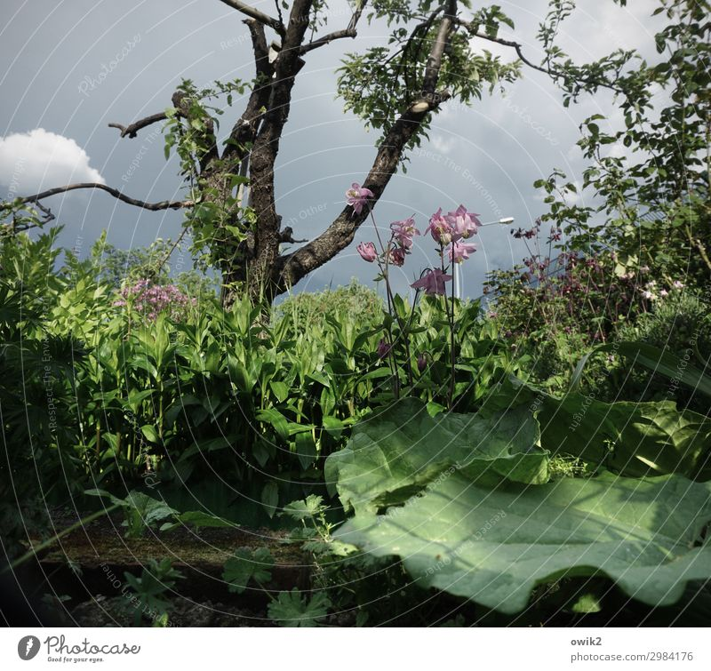 Cabbage without turnips Environment Nature Landscape Plant Sky Clouds Spring Beautiful weather Tree Flower Bushes Blossom Foliage plant Wild plant Garden