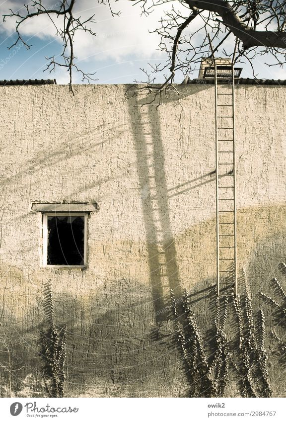 for climbers Sky Clouds Tree Twigs and branches Ivy Falkenberg Small Town House (Residential Structure) Wall (barrier) Wall (building) Facade Window Fire ladder