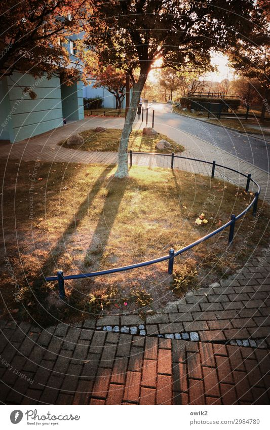 Nature Plant Tree Animal Calm Autumn Environment Grass Metal Illuminate Idyll Bushes Beautiful weather Concrete Sidewalk